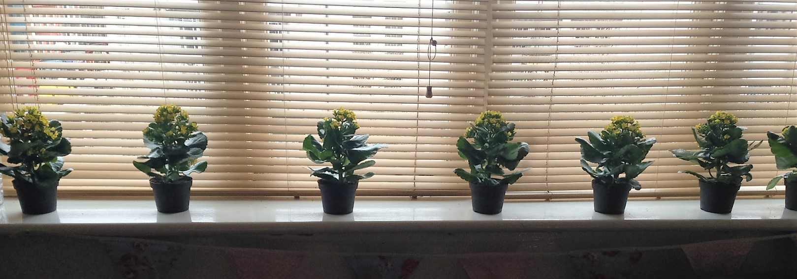 Flower pots along a window sill.